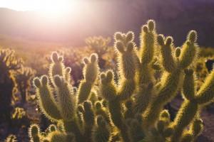 cactus-731125_1280